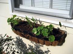 side flowerbox