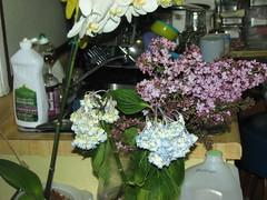 I'm a flower killer