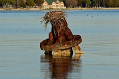 Mooring dolphin with osprey nest (SchuminWeb) Tags: schuminweb ben schumin web december 2016 maryland md st marys county saint saintmarys stmarys piney point pineypoint mooring dolphin dolphins moor osprey nest nesting site sites nests bird birds metal rust rusted rusty boats boating boat potomac river potomacriver water rivers