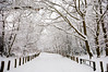 CE6EP0 (ios.joy.123) Tags: winter snow kent england uk road path trees white covered blizzard cold snowbound snowed whiteout out fence tree forest park keston beauty virgin untouched new fresh fall