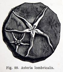 Anglų lietuvių žodynas. Žodis asteria reiškia n min. korundas lietuviškai.