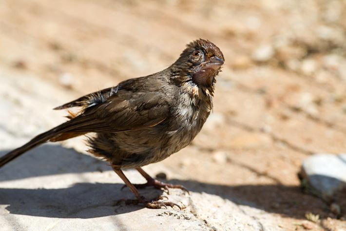 051111_bird09