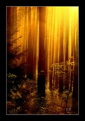 Light up my path (nature1955) Tags: fab forest magic chapeau bec magical soe breathtaking themoulinrouge blueribbonwinner firstquality greatphotographers supershot amazingtalent instantfave flickrsbest 35faves praiseworthy golddragon mywinner abigfave perfectangle photology magicalforest worldbest shieldofexcellence theexhibit goldmedalwinner platinumphoto ultimateshot holidaysvacanzeurlaub flickrenvy infinestyle goldenphotographer favemegroup6 treesubject diamondclassphotographer megashot todaysbestaward elegantgroup amazingamateur excellentphotographerawards flickrphotoaward searchandreward theunforgettablepictures onlythebestare oursupershots naturewatcher overtheexcellence colourartaward artlegacy diamondexcapture thegoldenmermaid betterthangood proudshopper theperfectphotographer thegardenofzen theroadtoheaven thegoldendreams goldstaraward theverybestofflickr tup2 flickrestrellas exploreheaven exquisiteimage life~asiseeit multimegashot showmeyourqualitypixels alemdagqualityonlyclub 1000commentsfaves magicdonkeysbest vanagram oraclex