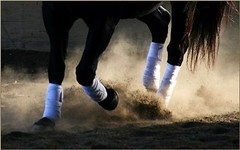 Obsessed With Hooves (sagetopaz) Tags: horses horse cloverdale equine hooves dressage platinumphoto