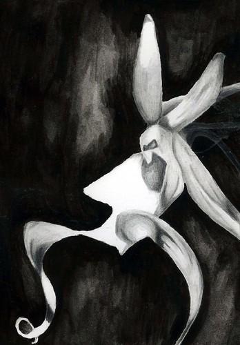 ghostorchid011