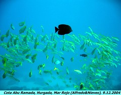 Picture 114 (Alfredo Martinez Argote) Tags: buceo marrojo