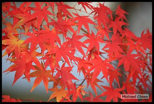 嵐山_20071124_151015_(1428)