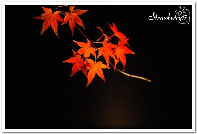 20071121京都永觀堂夜楓(7)