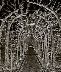 Thorny tunnel toward the light (gothicburg) Tags: garden dark gteborg weird sweden gothenburg avenue cryptic lightroom alle olympusc5050z annedal spittinshellscomp2 seminarietrdgrden