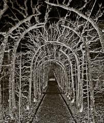 Thorny tunnel toward the light (gothicburg) Tags: garden dark göteborg weird sweden gothenburg avenue cryptic lightroom allée olympusc5050z annedal spittinshellscomp2 seminarieträdgården