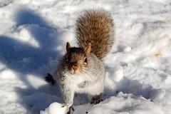A fat squirrel