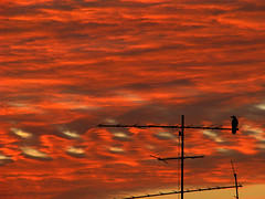 (Jonathan Harel) Tags: blue red clouds digital sunrise dawn israel reception viewlarge antenna frommybedroomwindow tvantenna ramathasharon img2312 viewonblack powershots5is