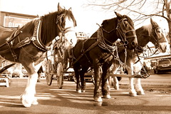 Olde Time Carriage (imageining) Tags: california ca street winter horses usa sunlight sepia contrast puddle photography town afternoon shadows carriage edited spokes wheels lot tourist rides bit attraction olde bigbear tyme clydesdale ritzy hooves manes funrides