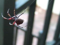 big spider 3