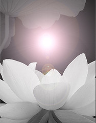 Lotus Flower - IMGP3693-lf - , , ,  , Fleur de Lotus, Lotosblume, , , (Bahman Farzad) Tags: china india inspiration flower macro fleur yoga tattoo de thailand truth cambodia pix peace image lotus blossom pics relaxing calming peaceful images teacher national sacred meditation therapy budha elegant inspirational spiritual simple hindu soulful heavenly buda tatto peacefulness devine indias   lotusflower therapist lotusflowers lotuspetal  lotuspetals  lotosblume   soulfulflower lotusflowerpetals lotusflowerpetal
