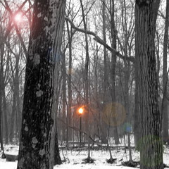 Just outside Spare Oom, in the land of War Drobe (Lady Erin) Tags: light snow woods lamppost narnia