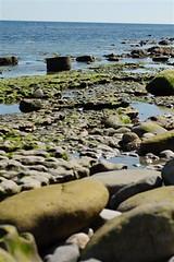 Ebb tide at Lyme Regis