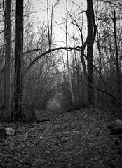 (Baptiste Lacoste) Tags: blackandwhite bw canada nature forest outside country qubec sainthilaire photoquebec
