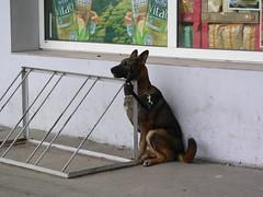 Dog rack (Todd Prouty) Tags: dog latvia jelgava