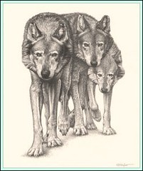 'The Pack' - Wolves - Fine Art Pencil Drawings www.drawntonature.co.uk (kjhayler) Tags: wildpictures wildlifeportraits wildanimals wildlifeart wildlifeartist wildlifeartists wildlifedrawings wildlifeimages wildlifephotography wildlifephotos openedition naturepictures naturalhistory kevinhayler drawingpictures drawingphotographs animalphotos animalpictures animalprints animalspictures animalart animaldrawings wolf wolfs wolves wild wildlife wilddog wilddogs timber grey gray lone timberwolf timberwolves greywolf greywolves graywolf graywolves lonewolf lonewolves picture pictures photo photos dog dogs pack wolfpack wolfpacks packs image images picturesofwolves pictureofwolves wolfpicture thewolf carnivores predators blackandwhite art animalswolves photosofwolves photoofwolf wolfphoto wolfphotos wolfdrawing painting paintings drawing drawings wolfdrawings wolfpaintings wolfart portrait