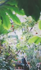 Gothenburg Botanical Garden (Felix van de Gein) Tags: göteborg sweden zweden goteborg gothenborg