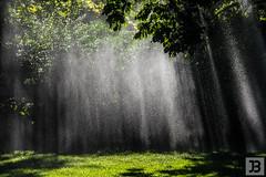 Beams of Light (Joel Bramley) Tags: bendigo light water park nature landscape grass wet trees leaves beams green