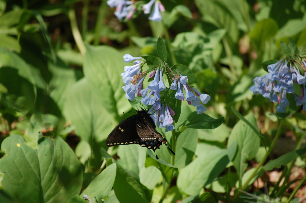 Butterfly on blue bells