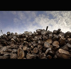 """ DRYING OUT "" (Wiffsmiff23) Tags: fire cozy log warm logs warmth dry bark lumberjack woodpile woodburner logged"
