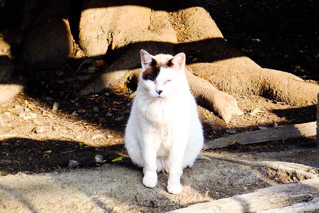 Today's Cat@2011-06-07