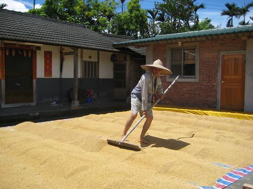 農夫直購:日曬米