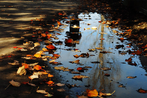 Fall Reflections 4157