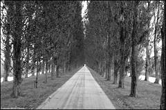 Elema's Pad (Dit is Suzanne) Tags: 27092007 nederland netherlands нидерланды groningen гронинген kardinge elemaspad canondigitalrebel sigma18125mm13556 img1611 zwartwit blackandwhite чернобелый дерева bomen trees 123nl views700