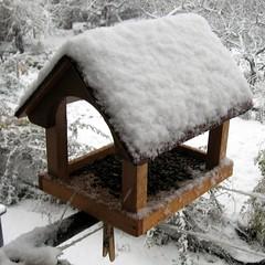 snow birdbox