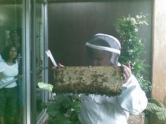 BeesOnline