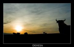 Dehesa (elmario) Tags: espaa sun sol sunrise landscape atardecer spain paisaje bull toro