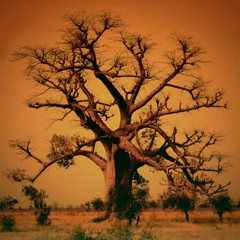 The Sahel Good Giant (Le grand baobab - The African Tree of Life)