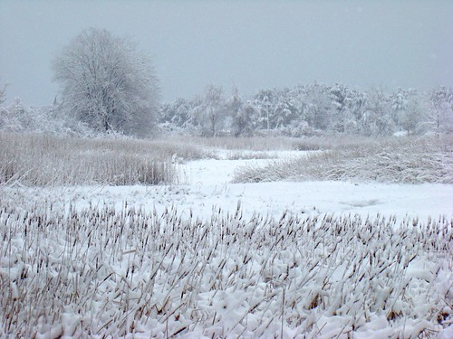 Winding snow above cattails