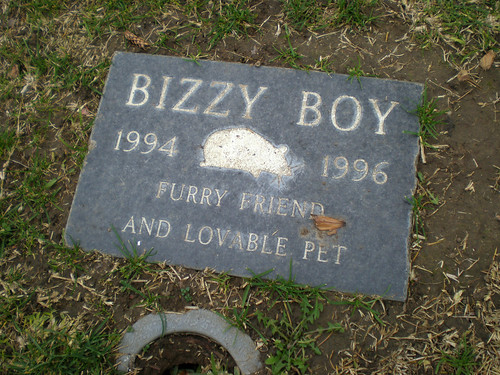 Bizzy Boy