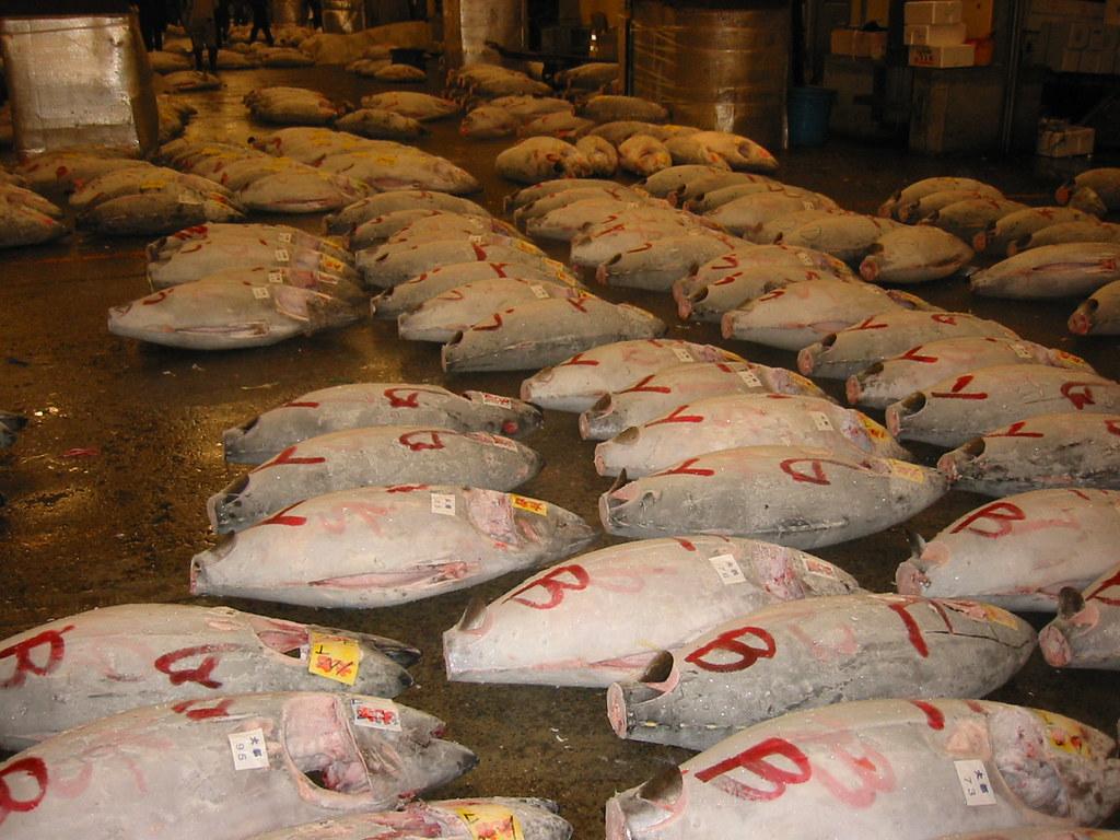 Tuna fish from Tokyo fish market