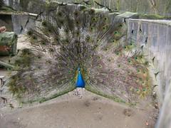 IMG_1999 [1024x768].JPG (yerseypijpelink) Tags: rhenen ouwehands dierentuin yersey
