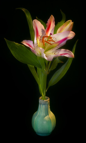 Lily in a Green Vase