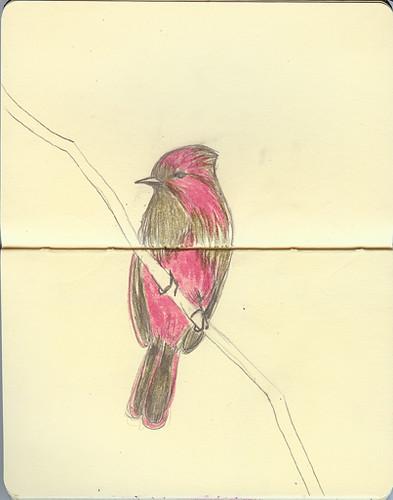 pinkPhoebe