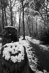 Smile, It's Snowing! :) (ElWanderer) Tags: wood uk trees england blackandwhite bw snow tree monochrome smile forest woodland blackwhite woking path menacing wideangle surrey creepy spooky smiley desaturation stump desaturated snowfall footpath canonefs1022mmf3545usm