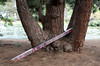 20080409_1869 Extended frequency (Fallen) (williewonker) Tags: colour tree art public pine spectrum stripes australia victoria odd bands unusual 2008 werribee helenlempriere nationalsculptureaward twtmesh220811