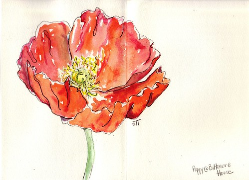 Poppy in Gouache