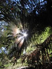 Sonnenstrahlen im Farn