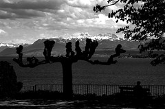 STRANGE TREE (olszuffka) Tags: white lake black mountains tree clouds switzerland view geneva bank coppet
