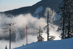 The red pole (No_Mosquito) Tags: winter fog valley trees cold mountains clouds light reiteralm ennstal styria austria alps europe canon powershot g7x mark ii red pole ski trip