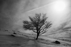 Pagoa Haya Fagus (joxelu.) Tags: baztan bn winter elurra negua arboles tree pyrenes haya invierno pirineos nieve montaña paisaje pagoa alpino argia fagus nafarroa canon contraluz monocromático haia light