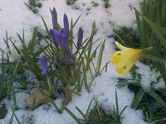 IMAG0090 (Ian Faz) Tags: flowers plants tress nessgardens